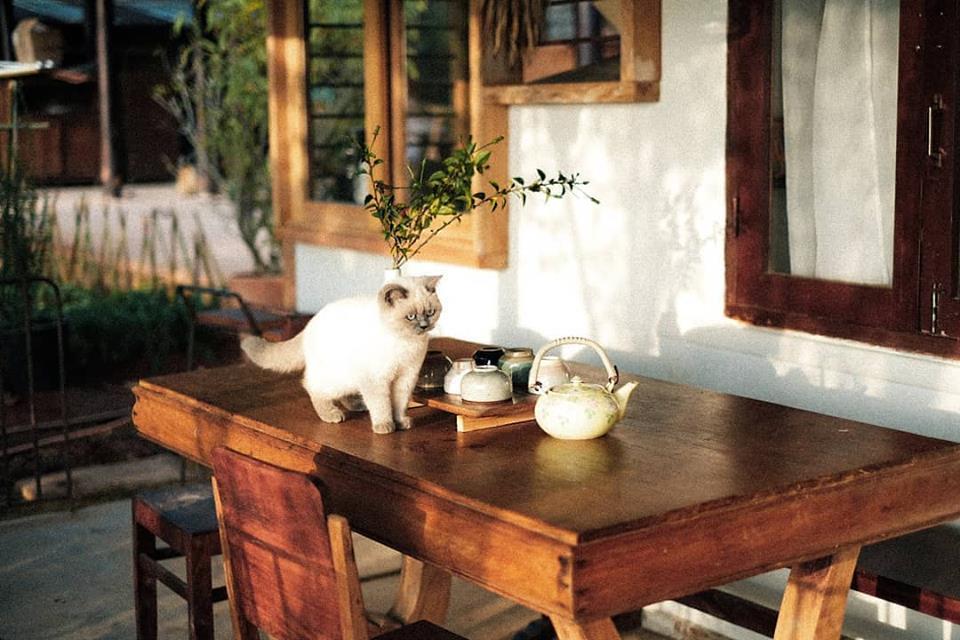 Homestay Đợi Một Người - Ngôi nhà có hạnh phúc đang chờ đón bạn